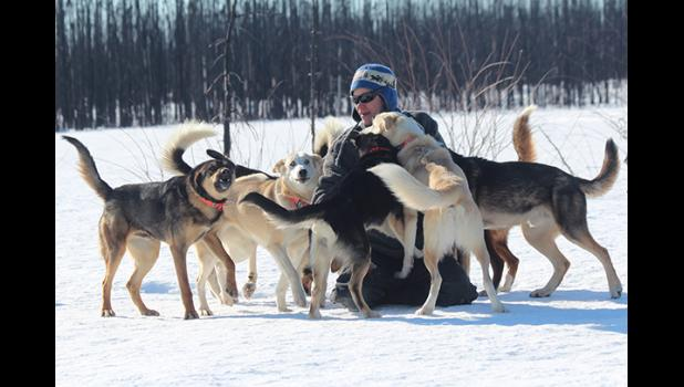 Joar Leifseth Ulsom plays with his winning Iditarod team back home in Willow.